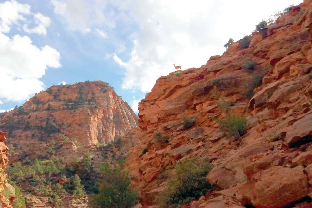 Zion National Park Hiking: Gifford Canyon